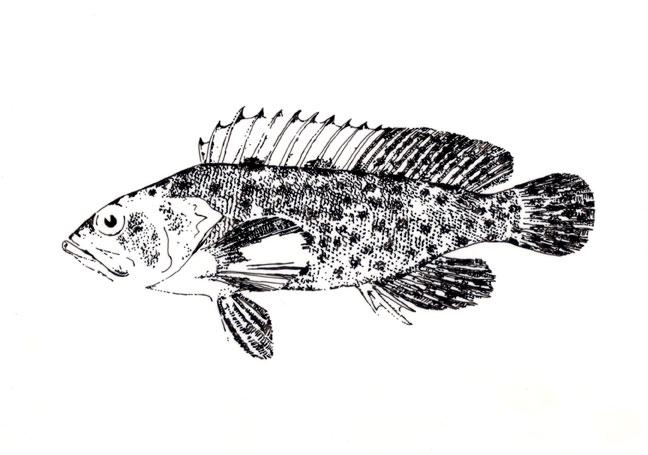 Fish study 1