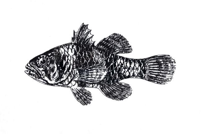 Fish study 2
