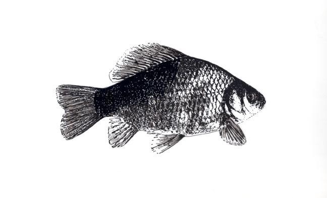 Fish study 3